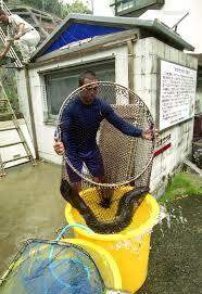 樺島オオウナギ井戸の清掃