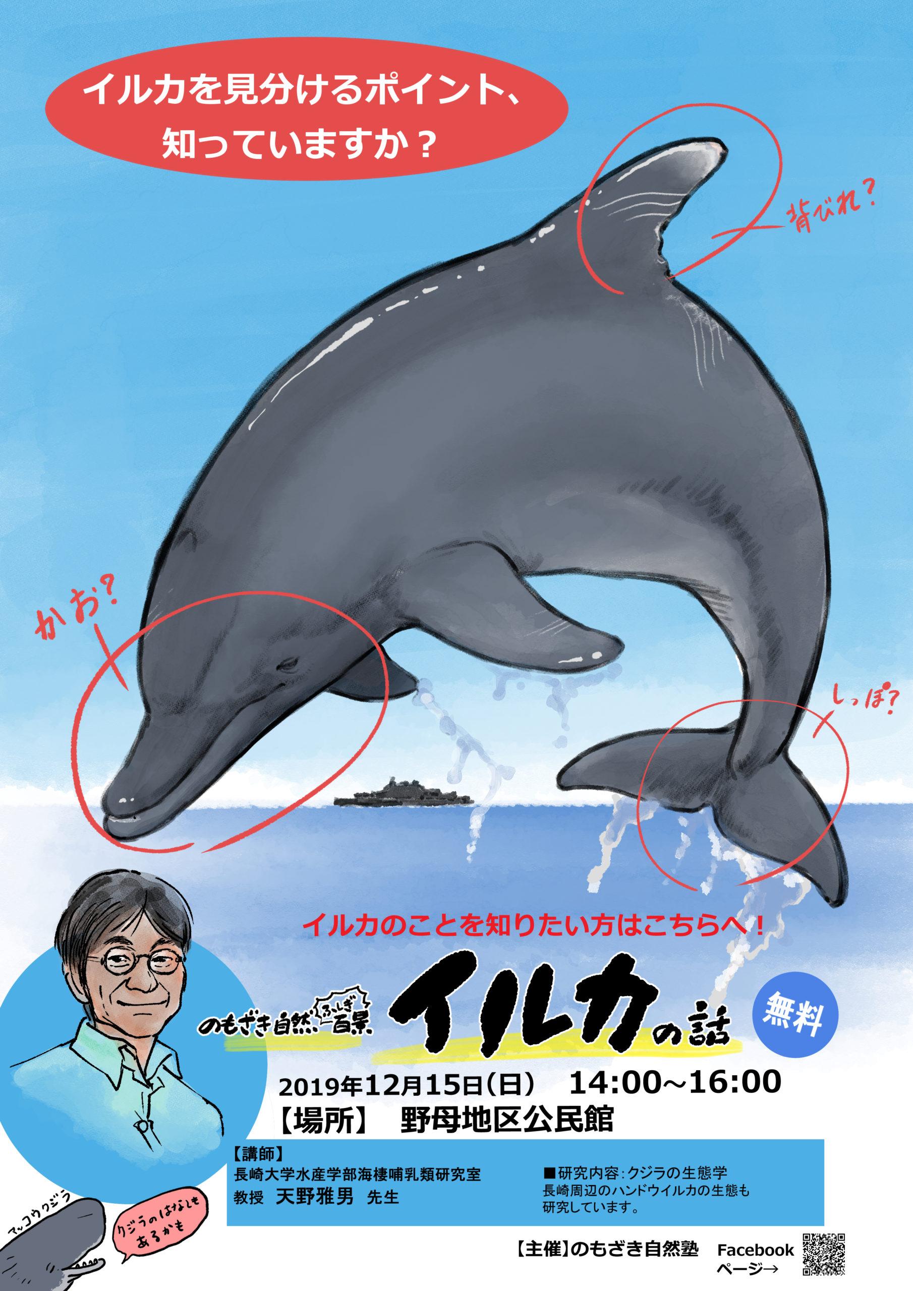 イルカの話